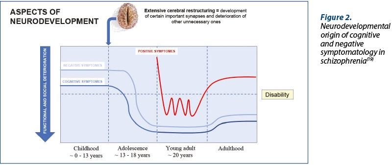 Figure 2. Neurodevelopmental origin of cognitive and negative symptomatology in schizophrenia(19)